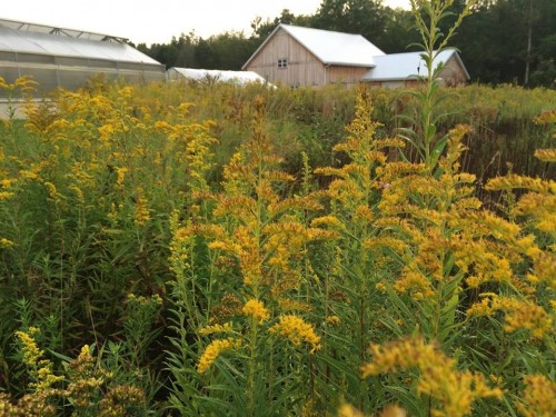 **Featured Program: Exploring Merry Lea Sustainable Farm**