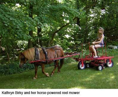 Mowing business plan