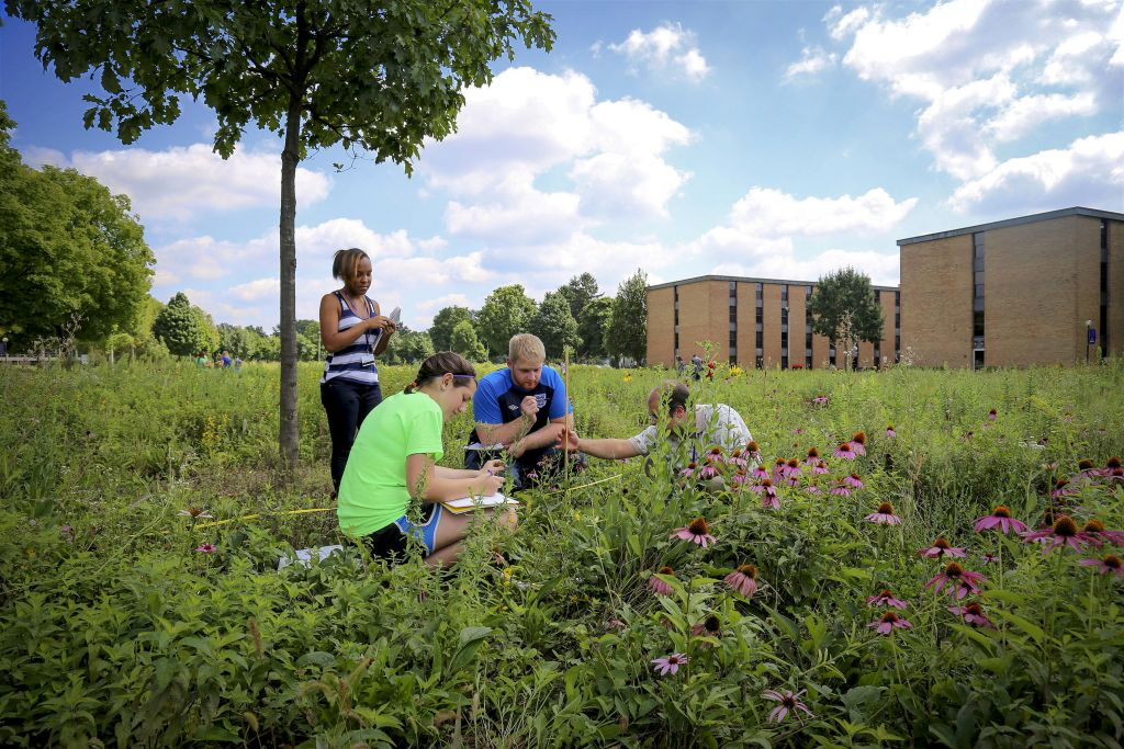 Students completing fieldwork in an ecology course at Goshen, a leader in sustainability