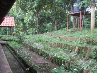 Some of the lush green work of ICIDRI
