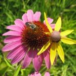 bee_plants