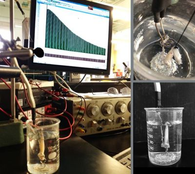 Experimental setup using frog muscles