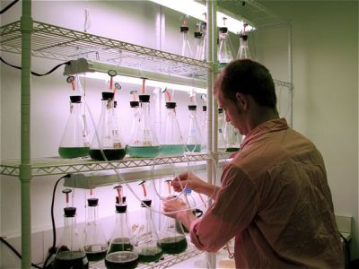 Student working with algae in the lab