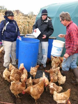 Hope CSA chickens