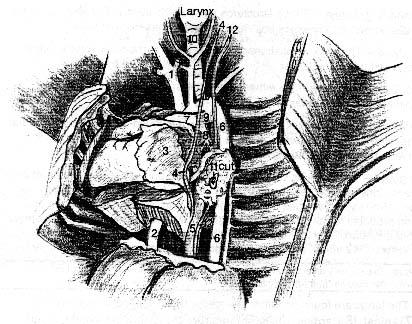 carolina fetal pig dissection guide