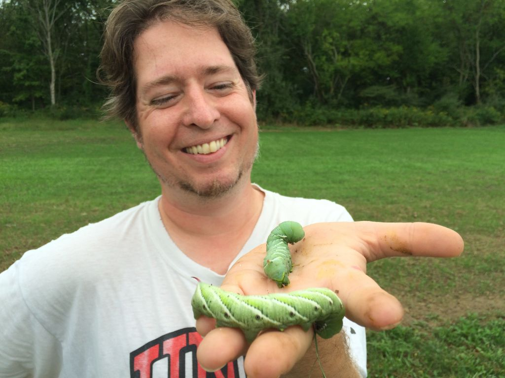 hornworms from garden at Merry Lea Sustainable Farm