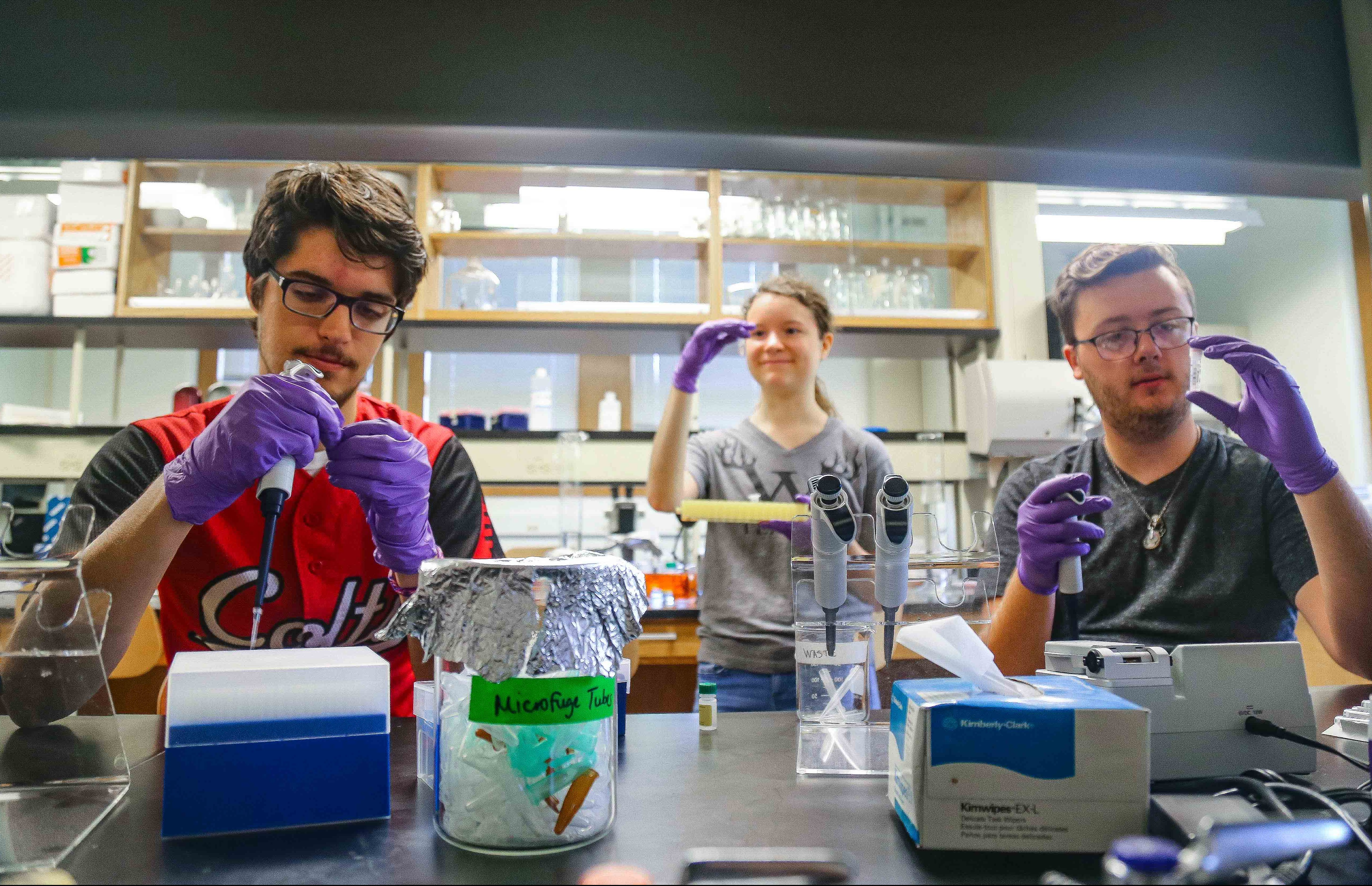 Three students wearing purple gloves working together in a lab