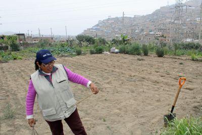 Señora Gregoria Flores helps coordinate urban gardens in Villa María del Triunfo.
