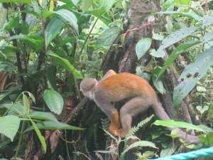 Photo Ecuador Monkey