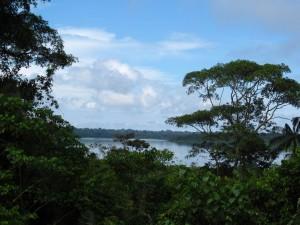 Photo Rainforest 2013