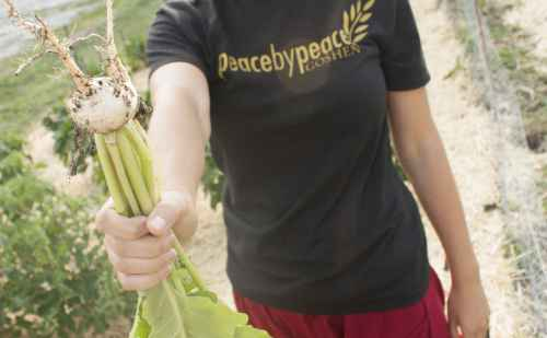 Trackside Community Garden fosters rich connections between people and the earth