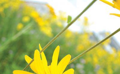 The Bulletin – Spring/Summer 2009