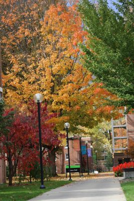 14_Fall_trees_signs