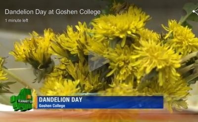 Dandelion Day at Goshen College – WNDU