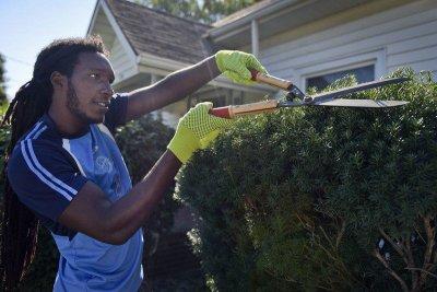 A man pruning a bush