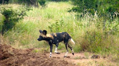 Data analysis, wild dogs, and Jessel Ranch visit