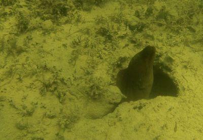 Green algae, octopus, plankton tows… loggerhead sponges!