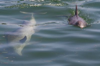 We Aren't the Only Mammals in the Ocean